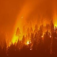 Une forêt en feu la nuit.