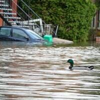 Un canard sur l'eau dans une rue de Montréal inondée