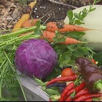 Des légumes dans un jardin