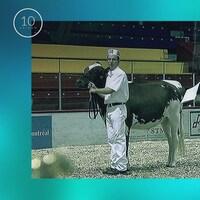 Pour les éleveurs, une exposition était l'occasion de montrer ses plus beaux animaux