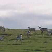 Le déclin important du troupeau depuis 20 ans aura permis à l'habitat de se régénérer.