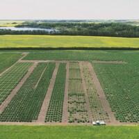 Ces milliers de rectangles dans les champs, ce sont de parcelles expérimentales de blé, de canola et de lentilles.