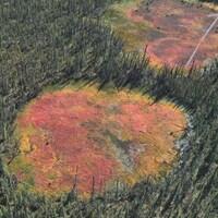 Vue aérienne de petites tourbières apparues dans une forêt au nord du 61e parallèle.