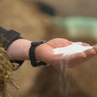 Une portion de sous-produit d'huile de palme utilisée dans l'alimentation des vaches laitières.