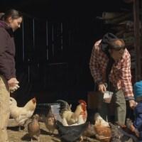 Un jeune couple d'agriculteur s'occupent de leurs poules avec un enfant.