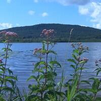 En avant-plan des plantes riveraines et juste derrière un lac. En arrière-plan, une petite montagne.