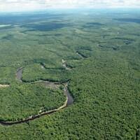 Vue aérienne d'une vaste forêt où serpentent différents cours d'eau.