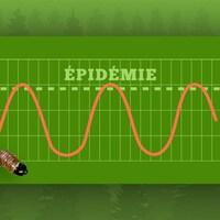 Graphique illustrant le cycle des épidémies de tordeuse.