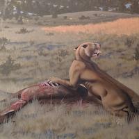 Représentation artistique de Machairodus lahayishupup mangeant un Hemiauchenia, un parent du chameau.