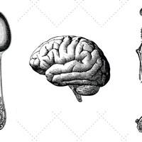 Des couverts, un cerveau et un squelette