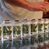Du cannabis dans de petits pots de verre, alignés sur un comptoir.