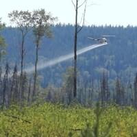 Un hélicoptère asperge une forêt de glyphosate.