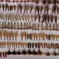 Étalage de mouches à pêche.