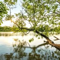 Des arbres près d'un cours d'eau.
