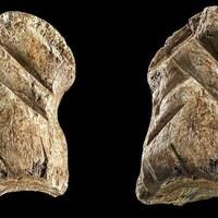 Un os gravé par Néandertal.