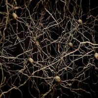 Représentation de neurones dans le cerveau humain