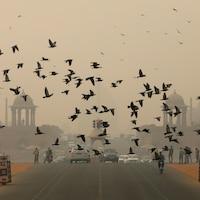 Des oiseaux s'envolent devant un ciel fort dense en fumée.