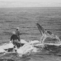 Deux hommes observent la queue d'une baleine qui sort de l'eau à bord d'un petit bateau à moteur.