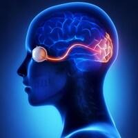 Une représentation de l'œil, du nerf optique et du cerveau.