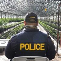 Un policier de dos dans une serre de cannabis.