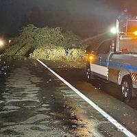 Un arbre bloque partiellement une route, tandis qu'un policier contrôle la circulation.