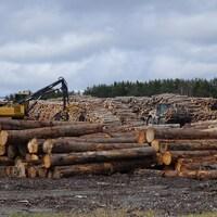 L'industrie forestière est au coeur de l'économie de Saint-Pamphile.