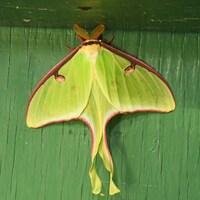 Un papillon sur une planche de bois.