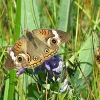 Un papillon se trouve sur une fleur.