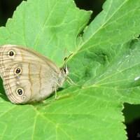 Un papillon sur une feuille.