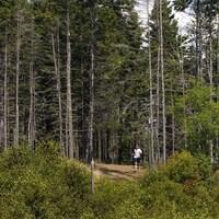 Un homme fait du jogging entouré de hauts arbres au parc Point Pleasant, en été.