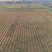 Image aérienne de milliers de parcelles rectangulaires de plantes brunes et vertes.