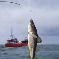 La pêche à la morue