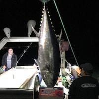 La pêche au thon rouge en ouverte
