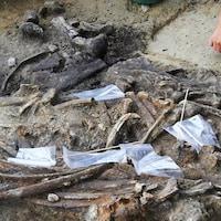 Pas moins de 400 ossements d'animaux y ont été découverts, dont une grande partie du squelette d'un rhinocéros et 57 artefacts en pierre.
