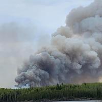 Des arbres avec beaucoup de fumée, en raison d'un feu de forêt.