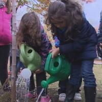 Des élèves arrosent un arbre