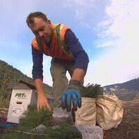 Un planteur d'arbres en Colombie-Britannique portant des gants se penche vers un sac.