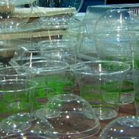 Des contenants en plastique transparent.