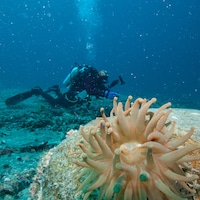 Un plongeur sous l'eau
