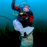 Une plongeuse recueille des échantillons d'algues dans la baie d'Hudson.