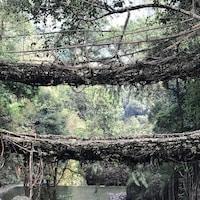 Le double pont de racines du village de Nongriat est une des merveilles architecturales de la tribu khasi. La structure aurait plus de 200 ans.