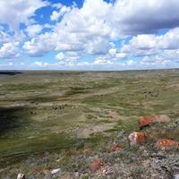 Une prairie avec des vaches au loin.