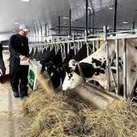 Deux hommes nourrissent des vaches dans une ferme de l'Ontario.