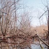 La biologiste Lyne Bouthillier, munie de jumelles, scrute les eaux d'un étang.