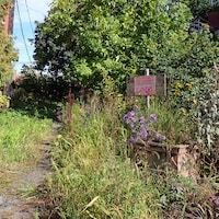 Créée vers 2010 dans Mercier-Ouest, la ruelle verte Repentigny est maintenant abandonnée comme en témoignent les hautes herbes sur la photo.