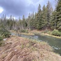 Un ruisseau dont la couleur de l'eau est verdâtre.