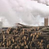 Une pile de billot de bois sur le site de l'usine.