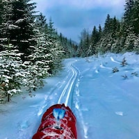Un traîneau sur une piste de ski de fond dans la forêt.