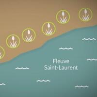 Combien y a-t-il de plantes menacées de disparition au Québec?