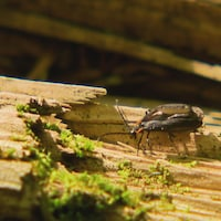 Un insecte sur une bûche de bois mort.